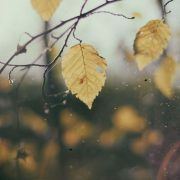 leaf_autumn_nature_fall-173707