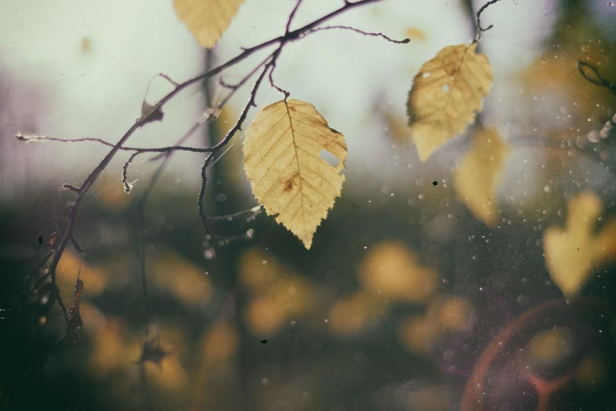 leaf_autumn_nature_fall-173707